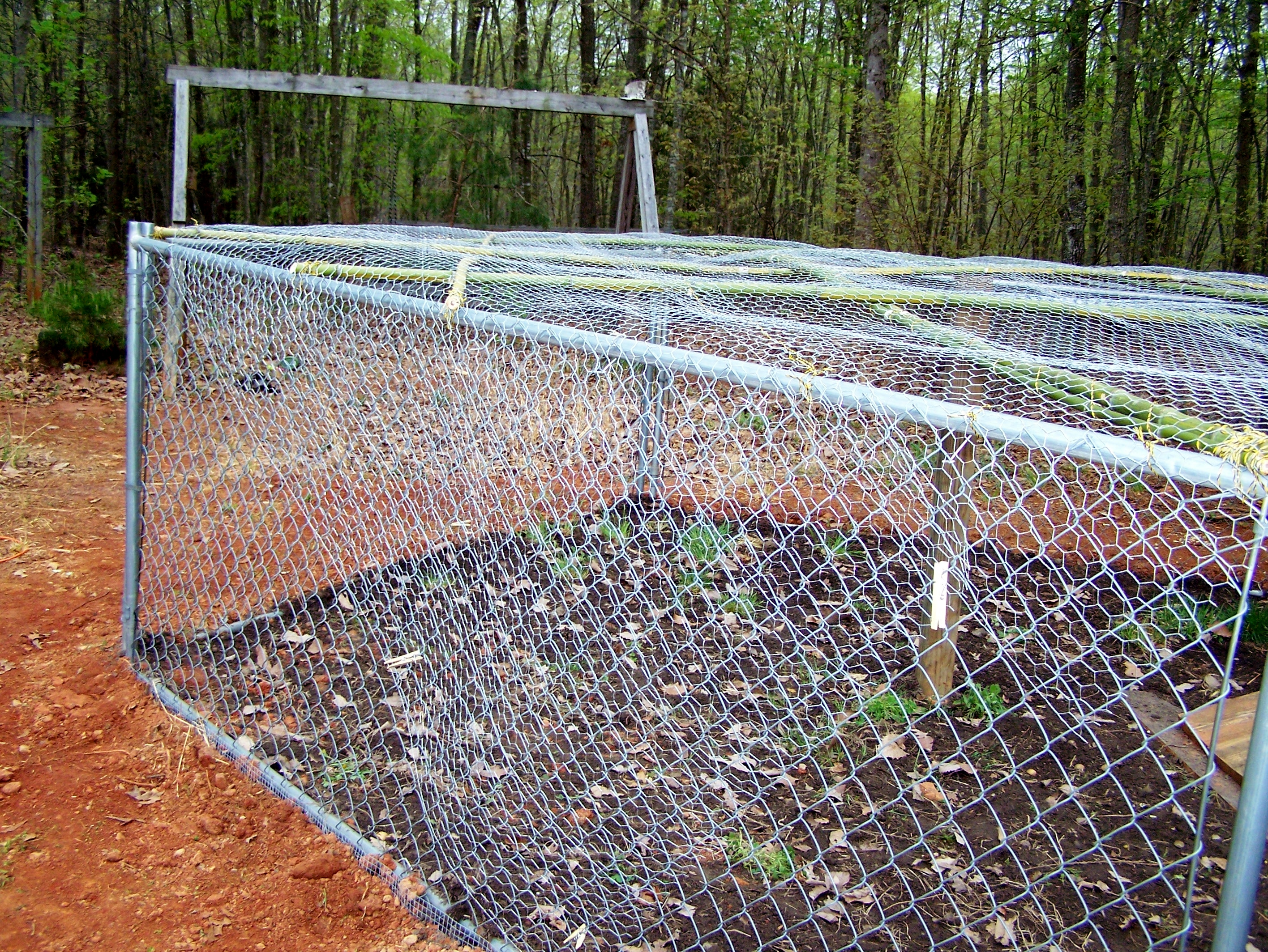 Chicken wire | My Life In The Country